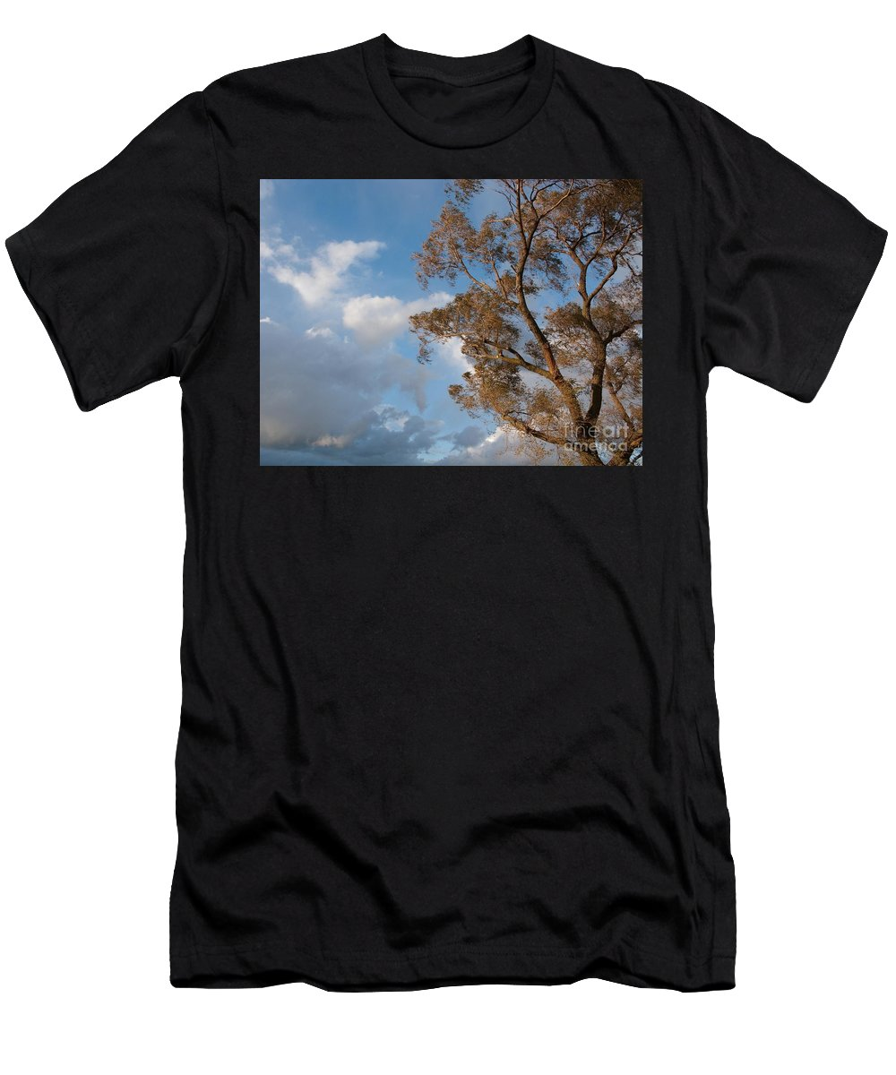 Tree Men's T-Shirt (Athletic Fit) featuring the photograph Sun And Wind by Ann Horn