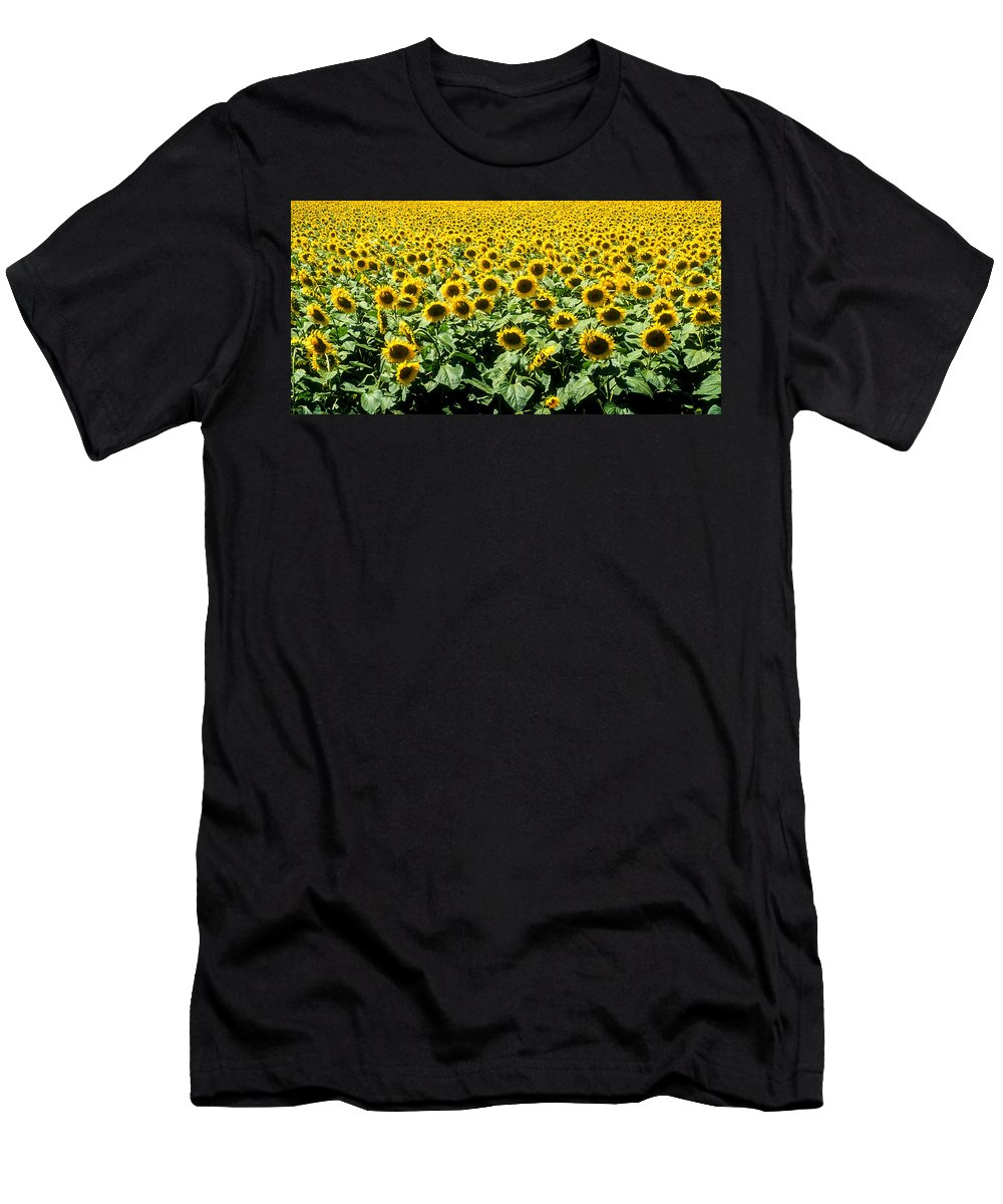 France Men's T-Shirt (Athletic Fit) featuring the photograph Sunflowers by Matthew Pace
