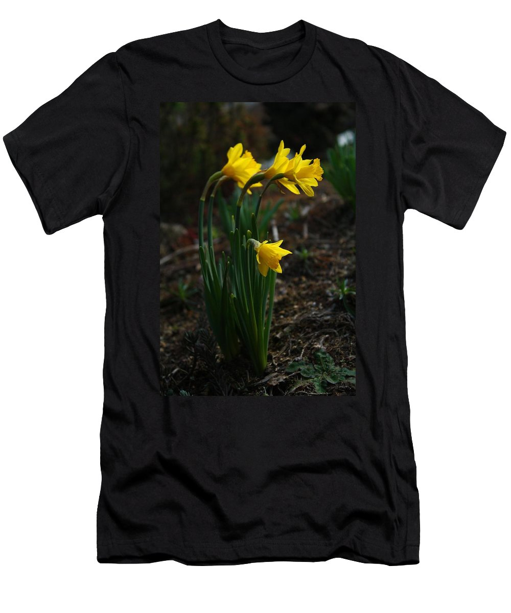Daffs Men's T-Shirt (Athletic Fit) featuring the photograph Taller Daffs by Kathryn Meyer