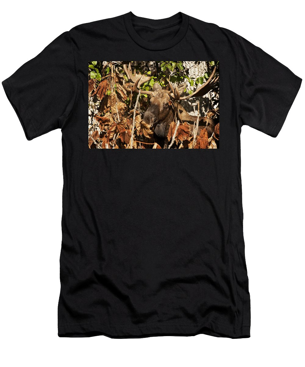 Moose Men's T-Shirt (Athletic Fit) featuring the photograph Tangled Up by Ted Raynor