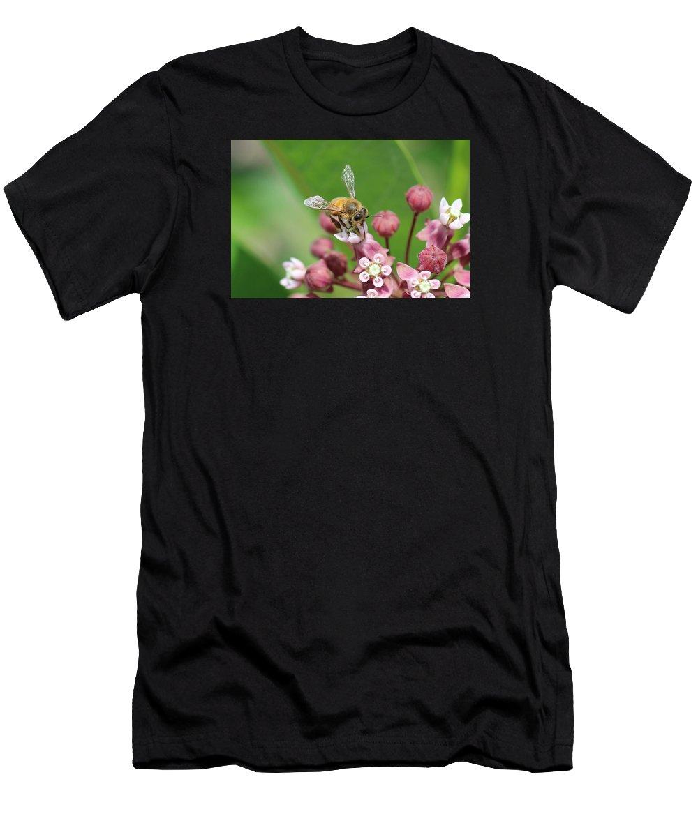 Honeybee Men's T-Shirt (Athletic Fit) featuring the photograph Teetering On Milkweed by Lucinda VanVleck