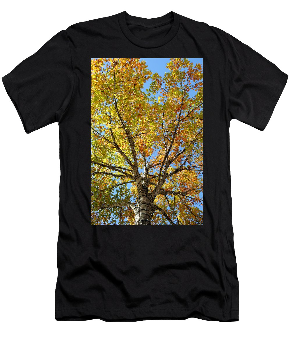 Colors Men's T-Shirt (Athletic Fit) featuring the photograph The Colors Of Fall by David Hart