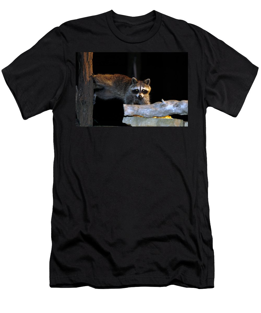 Raccoon Men's T-Shirt (Athletic Fit) featuring the photograph The Cornbread Bandit Homestretch by Randall Branham