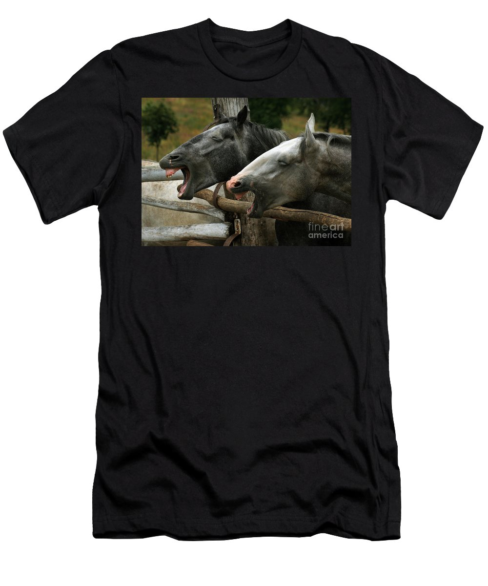 Horses Men's T-Shirt (Athletic Fit) featuring the photograph the double Yawn by Angel Ciesniarska