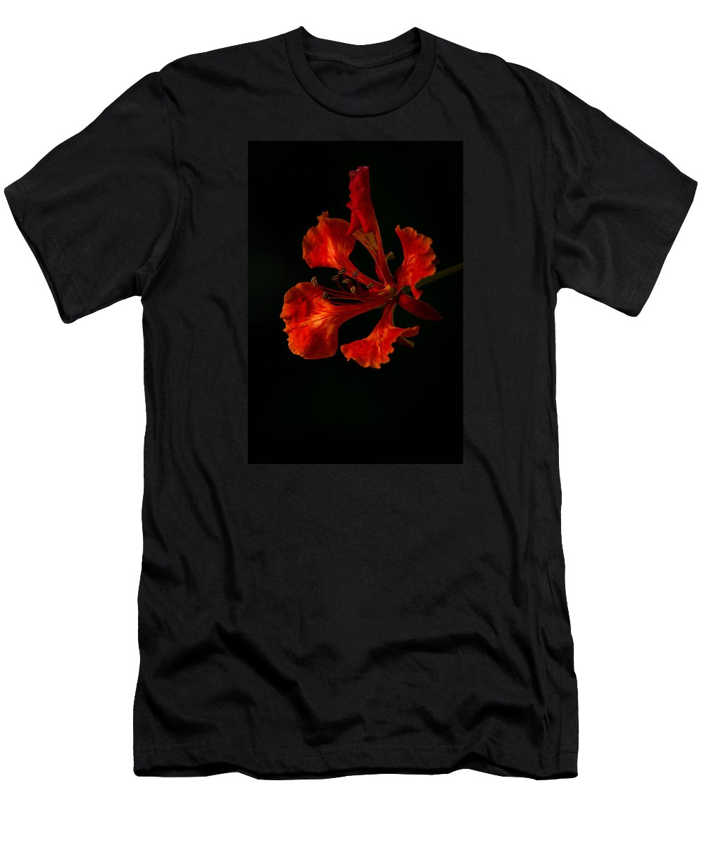 Poinciana Men's T-Shirt (Athletic Fit) featuring the photograph The Fire Flower by Mario Morales Rubi