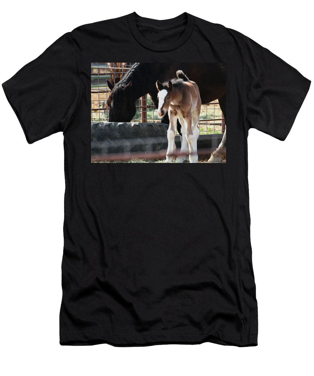 The Flying Colt With The Big White Feet And Mom Men's T-Shirt (Athletic Fit) featuring the photograph The Flying Colt With The Big White Feet by Tom Janca