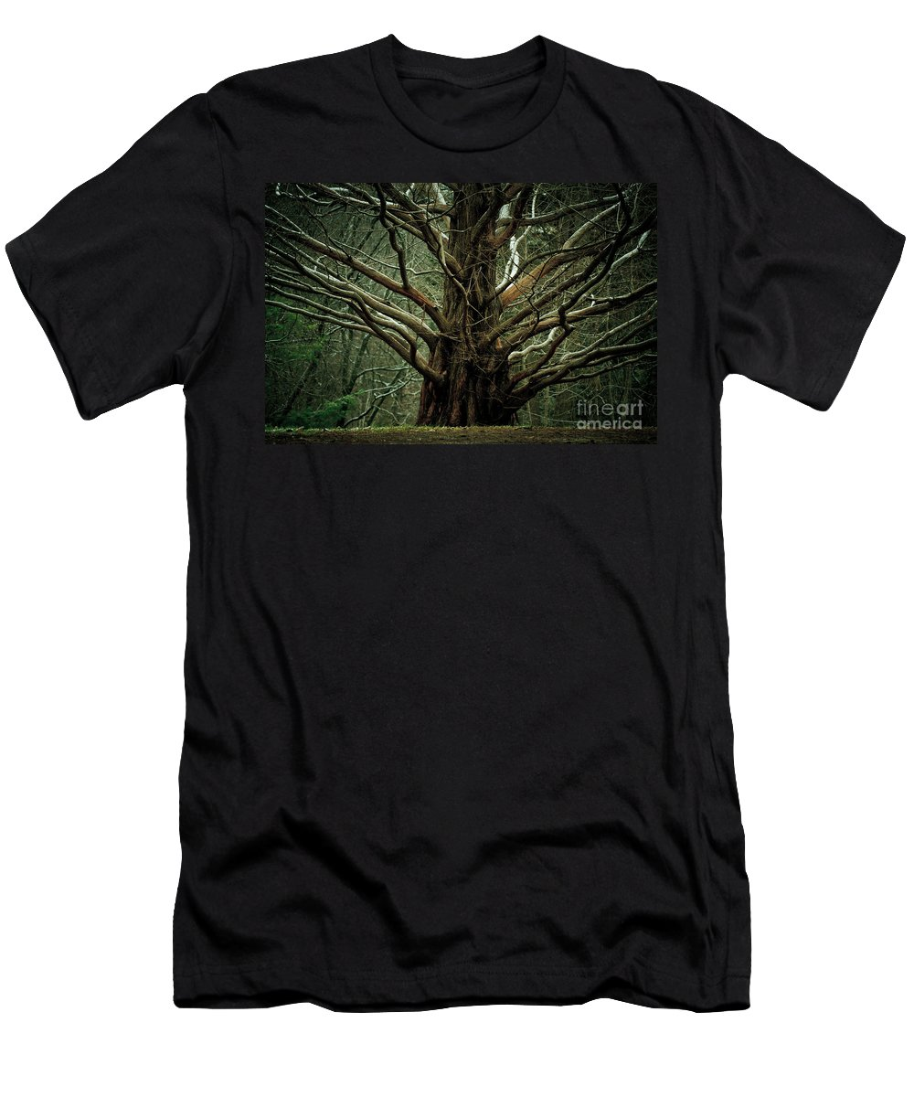 Tree Men's T-Shirt (Athletic Fit) featuring the photograph The Hobbit Tree by Mary Smyth