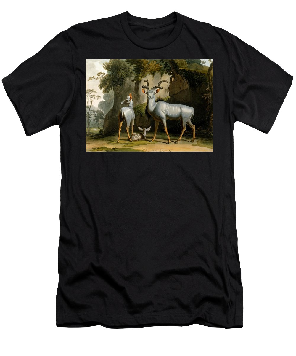 Koodoo Men's T-Shirt (Athletic Fit) featuring the drawing A Kudus Or Kudu by Samuel Daniell