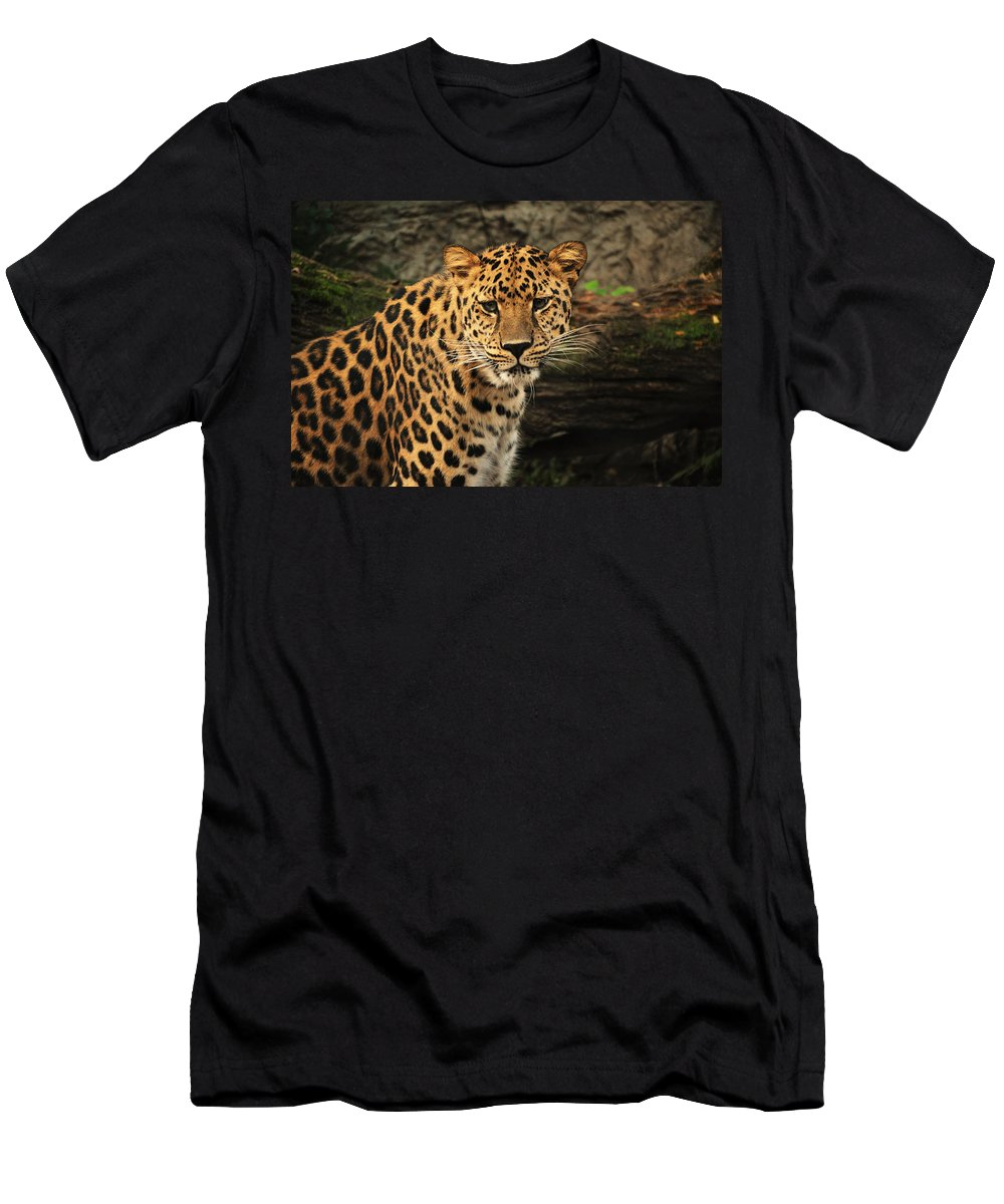 Leopard Men's T-Shirt (Athletic Fit) featuring the photograph The Stare Down by Richard Booth