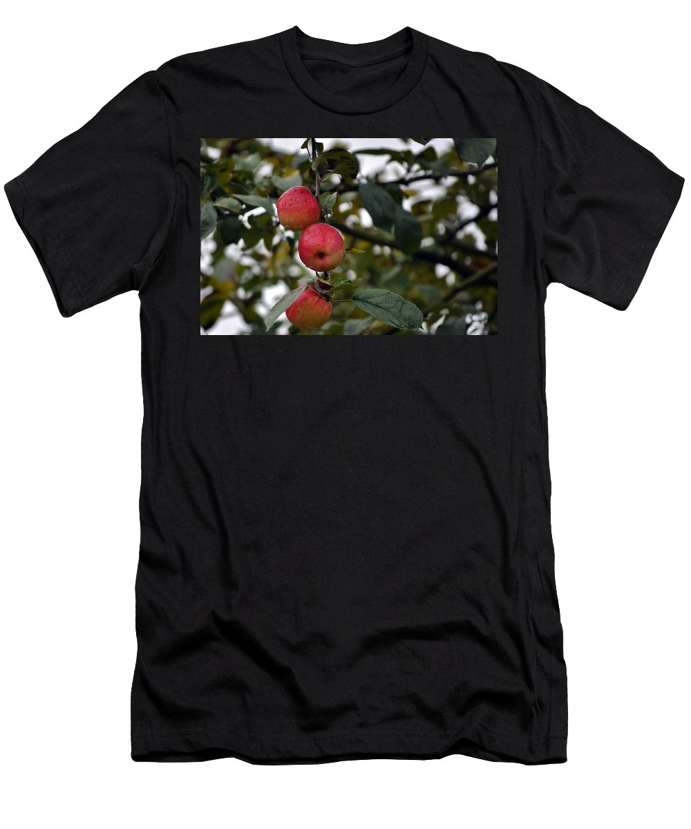 Fruit Men's T-Shirt (Athletic Fit) featuring the photograph Three Apples by Tikvah's Hope