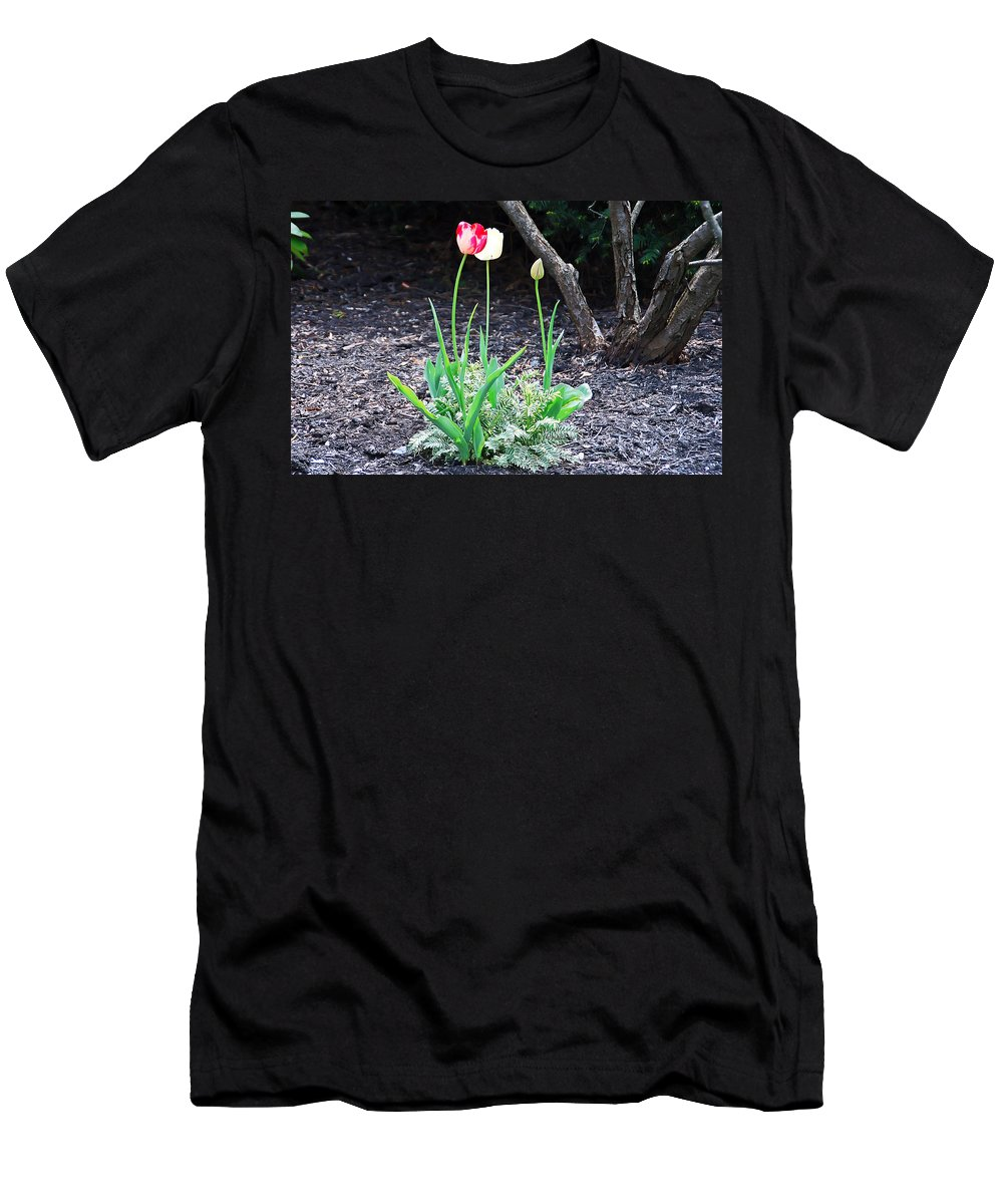 Tulip Men's T-Shirt (Athletic Fit) featuring the photograph Three Tulips by Aimee L Maher ALM GALLERY