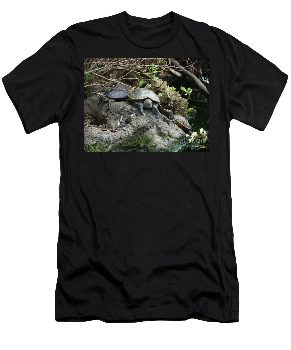 Turtles Men's T-Shirt (Athletic Fit) featuring the photograph Three Turtles by Robin Maria Pedrero