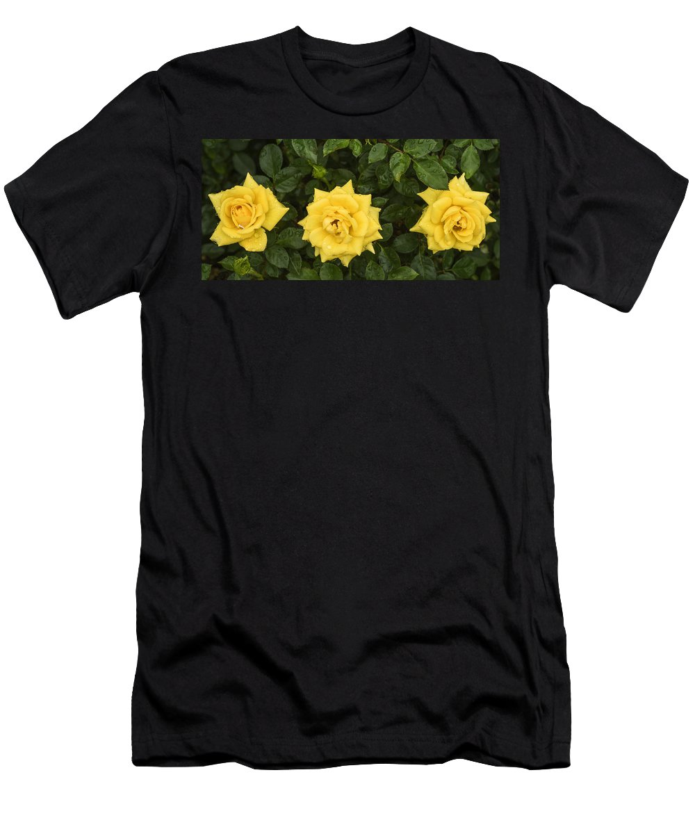 Yellow Roses Men's T-Shirt (Athletic Fit) featuring the photograph Three Yellow Roses In Rain by Vishwanath Bhat