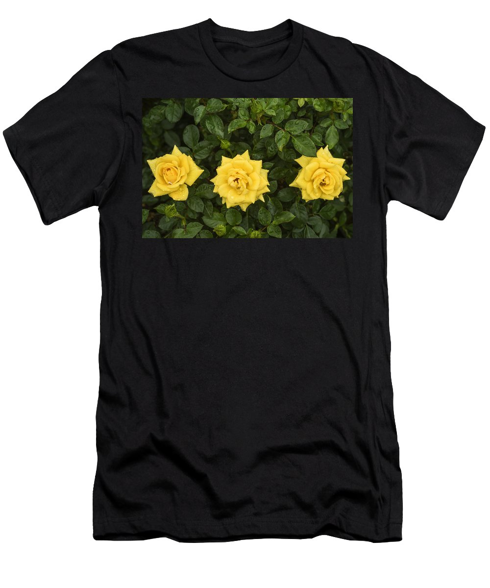 Yellow Roses Men's T-Shirt (Athletic Fit) featuring the photograph Three Yellow Roses by Vishwanath Bhat
