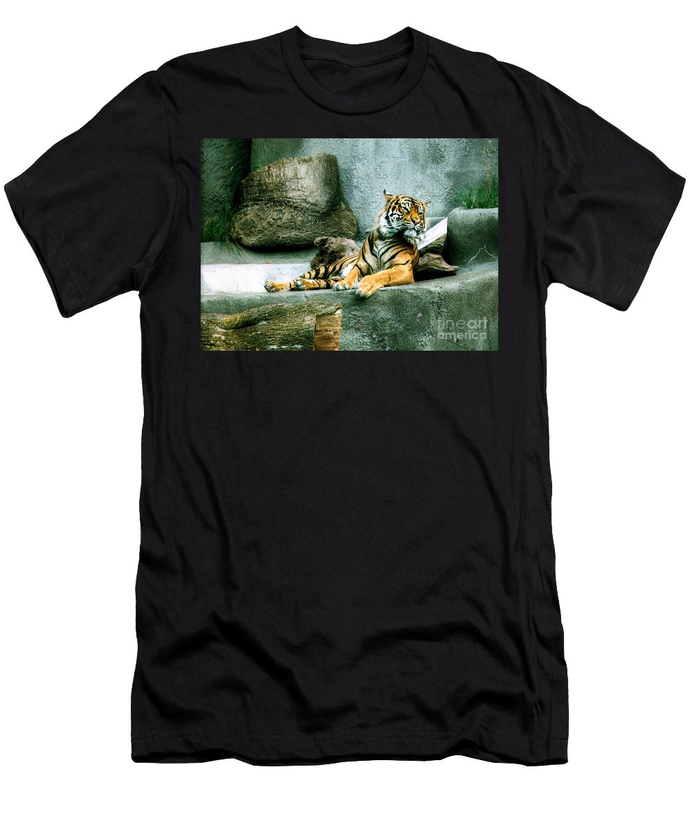 Tiger Men's T-Shirt (Athletic Fit) featuring the photograph Tiger by Rich Priest