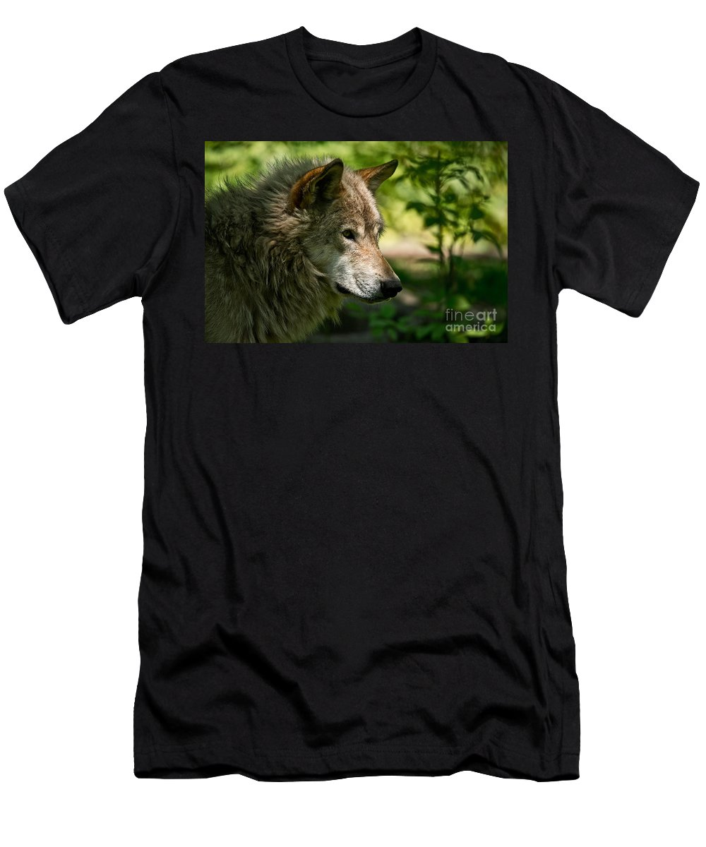 Timber Wolf Men's T-Shirt (Athletic Fit) featuring the photograph Timber Wolf Pictures 263 by Wolves Only