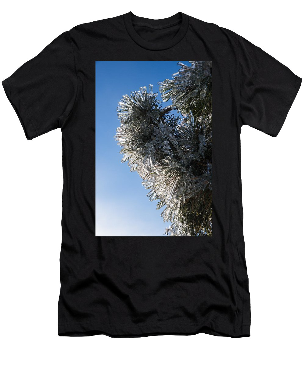 Toronto Ice Storm 2013 Men's T-Shirt (Athletic Fit) featuring the photograph Toronto Ice Storm 2013 - Pine Needle Flowers In The Sky by Georgia Mizuleva