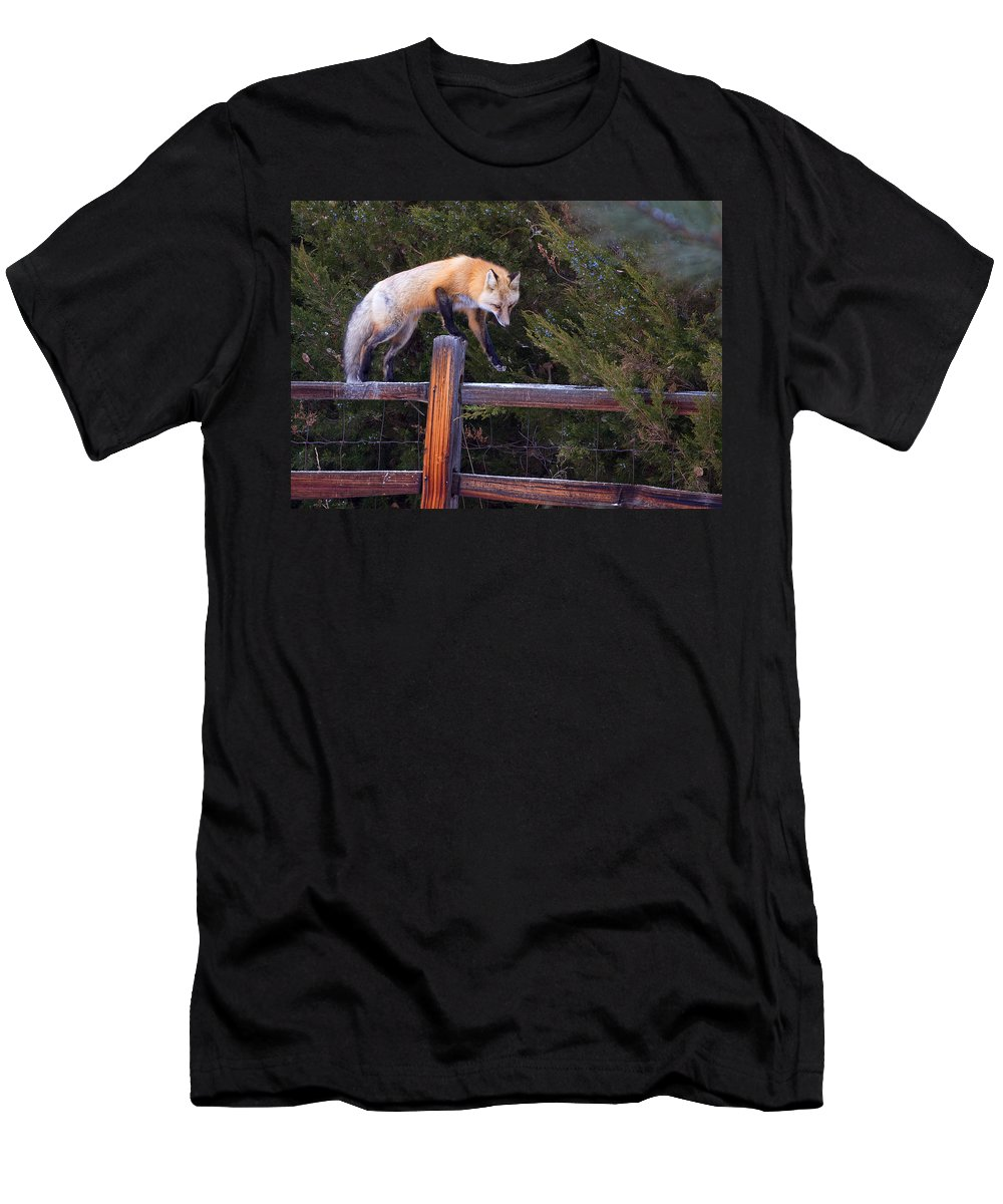 Foxfox On Fence Photograph Men's T-Shirt (Athletic Fit) featuring the photograph Traveling The Rails by Jim Garrison