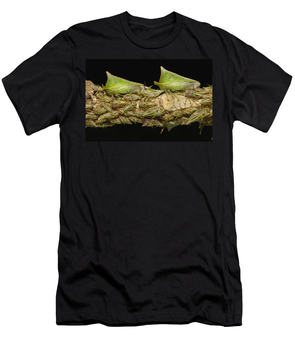 Feb0514 Men's T-Shirt (Athletic Fit) featuring the photograph Treehoppers And Nymphs Mindo Ecuador by Pete Oxford
