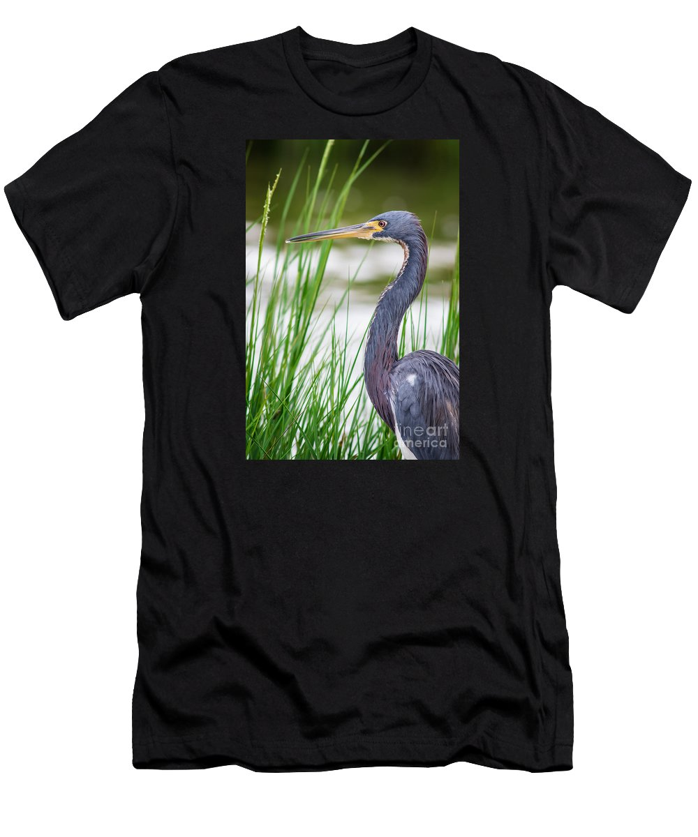Animal Men's T-Shirt (Athletic Fit) featuring the photograph Tricolored Heron by Robert Frederick