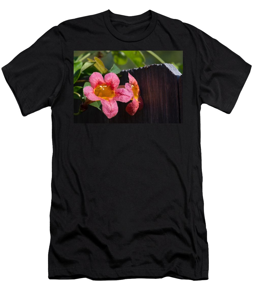 Trumpet Vine Men's T-Shirt (Athletic Fit) featuring the photograph Trumpet Vine With Friend by JG Thompson