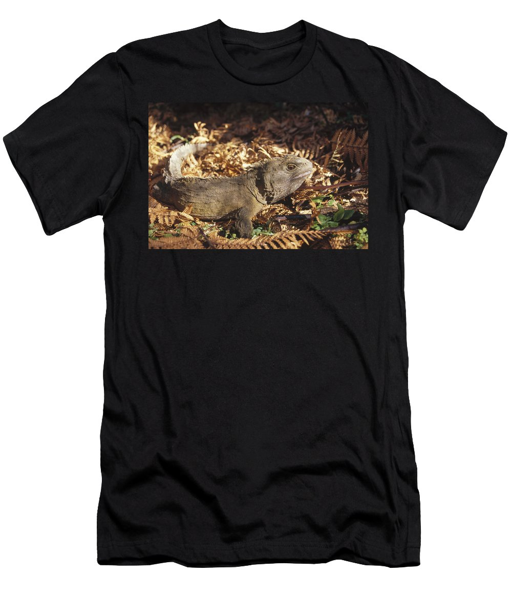 Feb0514 Men's T-Shirt (Athletic Fit) featuring the photograph Tuatara 70 Year Old Male New Zealand by Tui De Roy