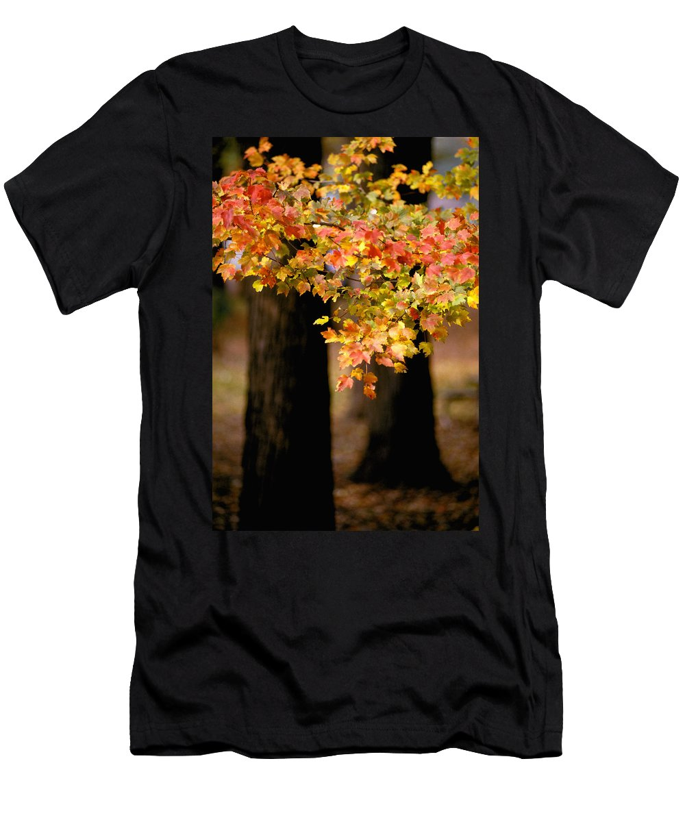 Autumn Men's T-Shirt (Athletic Fit) featuring the photograph Two Trees by Matthew Pace