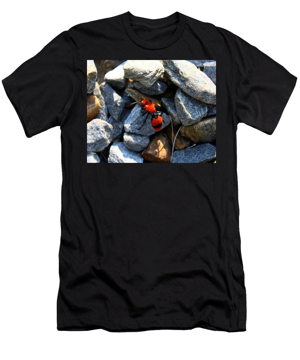 Ant Men's T-Shirt (Athletic Fit) featuring the photograph Velvet Ant by Kathryn Meyer