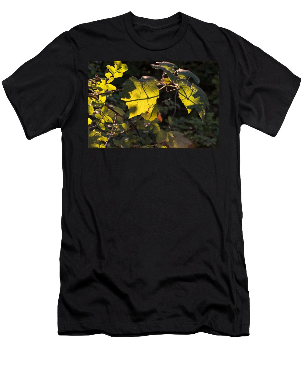 Vine Men's T-Shirt (Athletic Fit) featuring the photograph Vine Leaves At Sunset by JG Thompson
