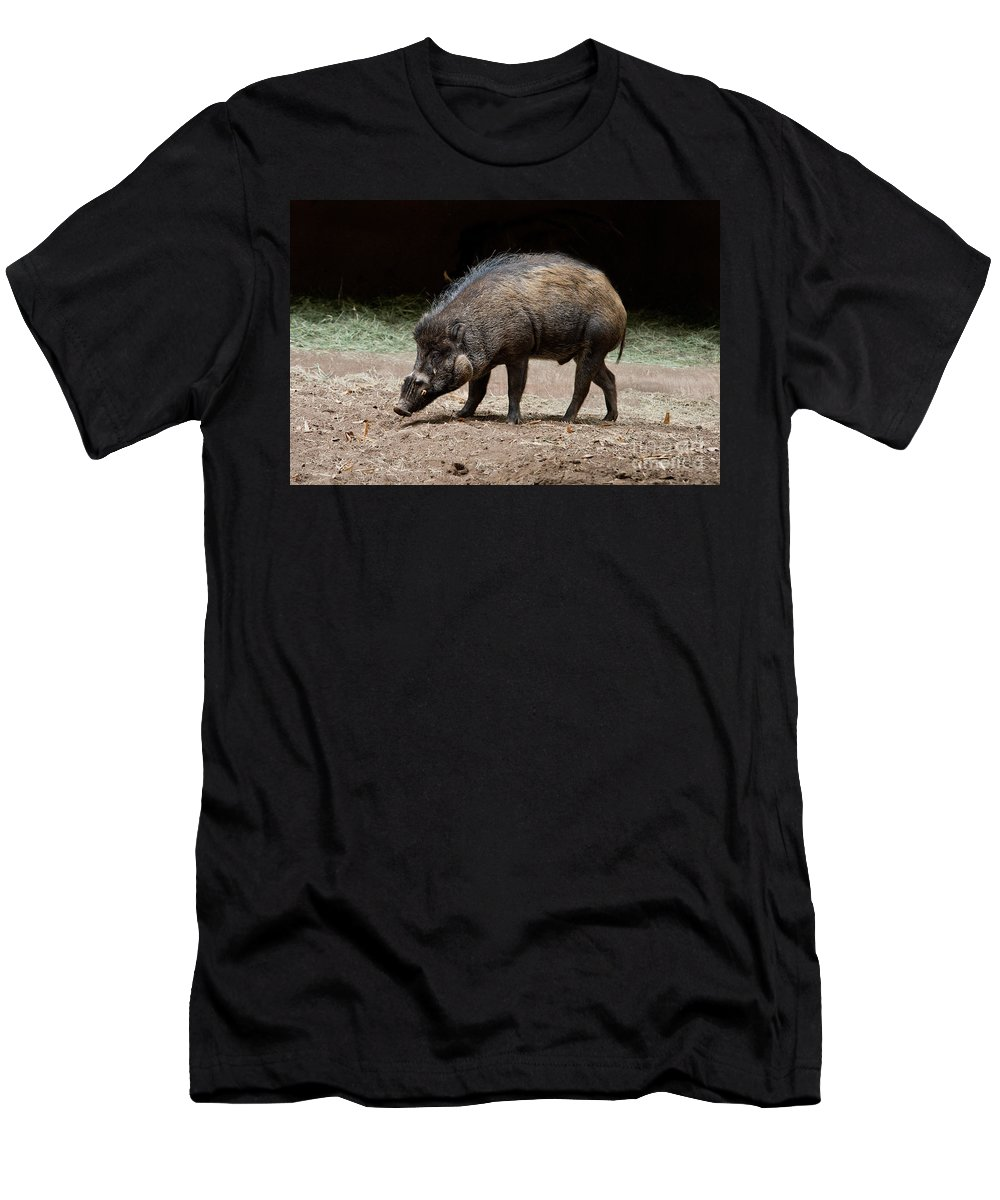 Animal Men's T-Shirt (Athletic Fit) featuring the photograph Visayan Warty Pig by Anthony Mercieca