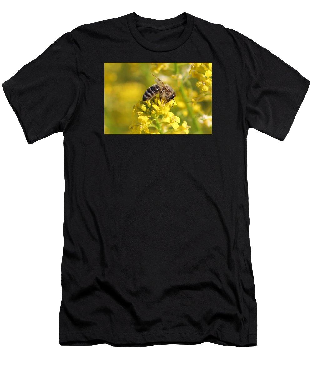 Honeybee Men's T-Shirt (Athletic Fit) featuring the photograph Wall Flower Pollen by Lucinda VanVleck