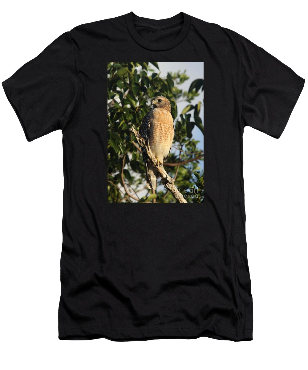 Hawk Men's T-Shirt (Athletic Fit) featuring the photograph Watchful Eyes - Red Shouldered Hawk by Christiane Schulze Art And Photography
