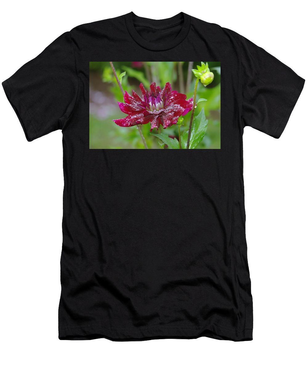 Viento Men's T-Shirt (Athletic Fit) featuring the photograph Waterdrops On Petals by Jeff Swan