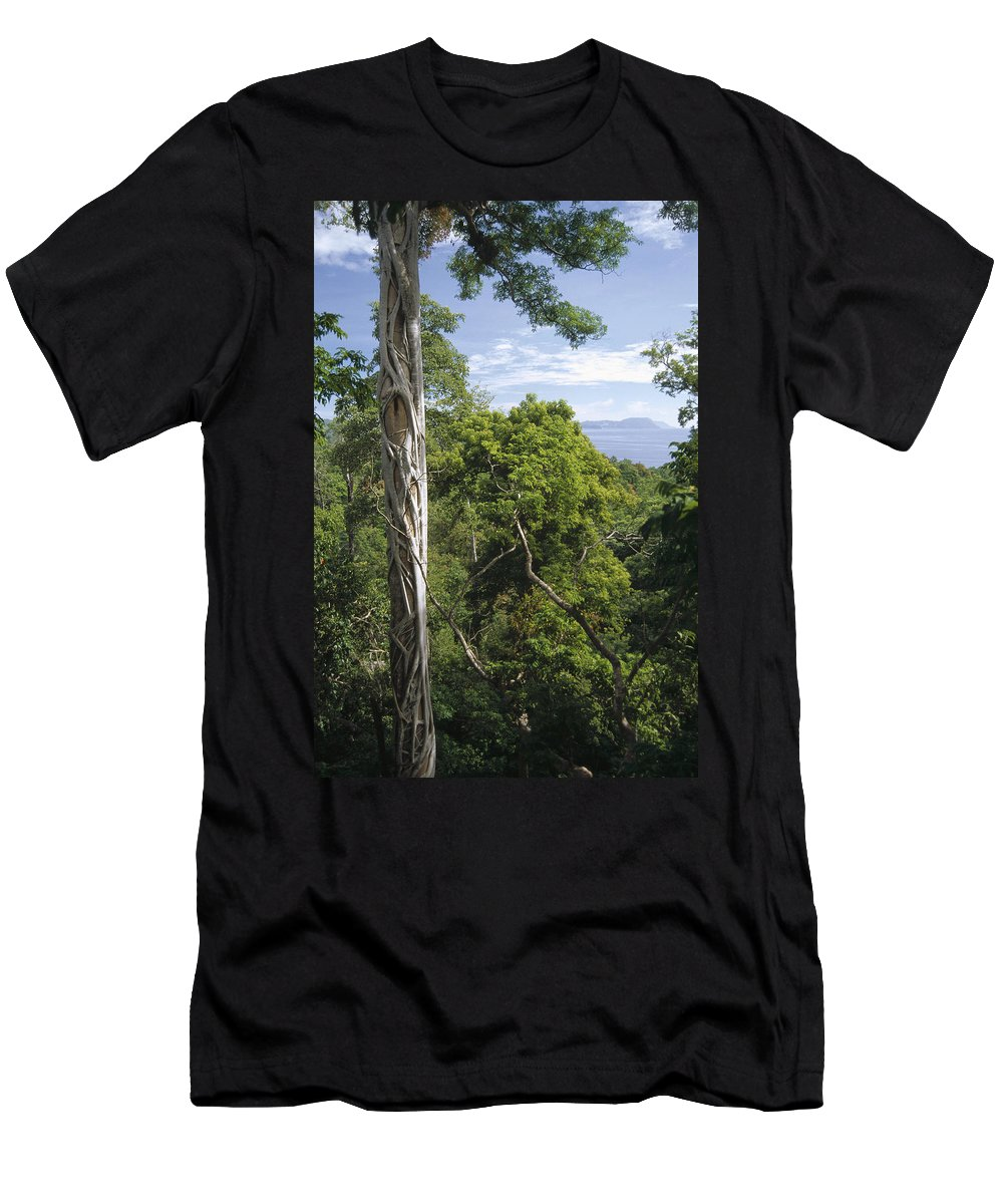 Feb0514 Men's T-Shirt (Athletic Fit) featuring the photograph Weeping Fig And Host Natu Tree Sulawesi by Tui De Roy