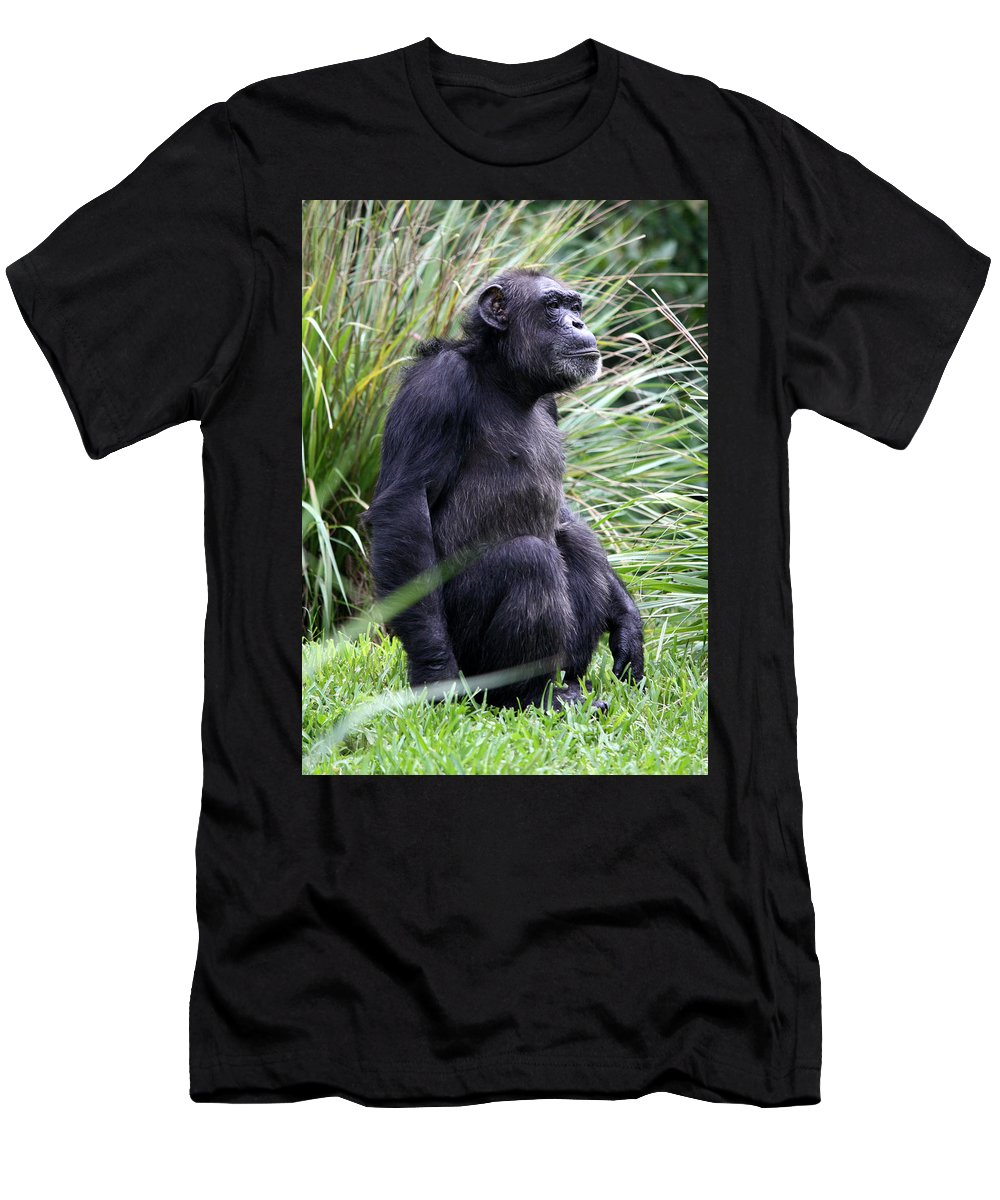 Busch Gardens Men's T-Shirt (Athletic Fit) featuring the photograph Well Worn by David Nicholls