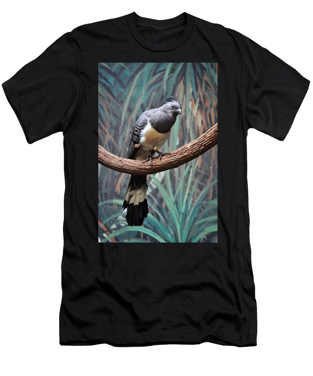 White-bellied Men's T-Shirt (Athletic Fit) featuring the photograph White-bellied Go-away-bird by Savannah Gibbs