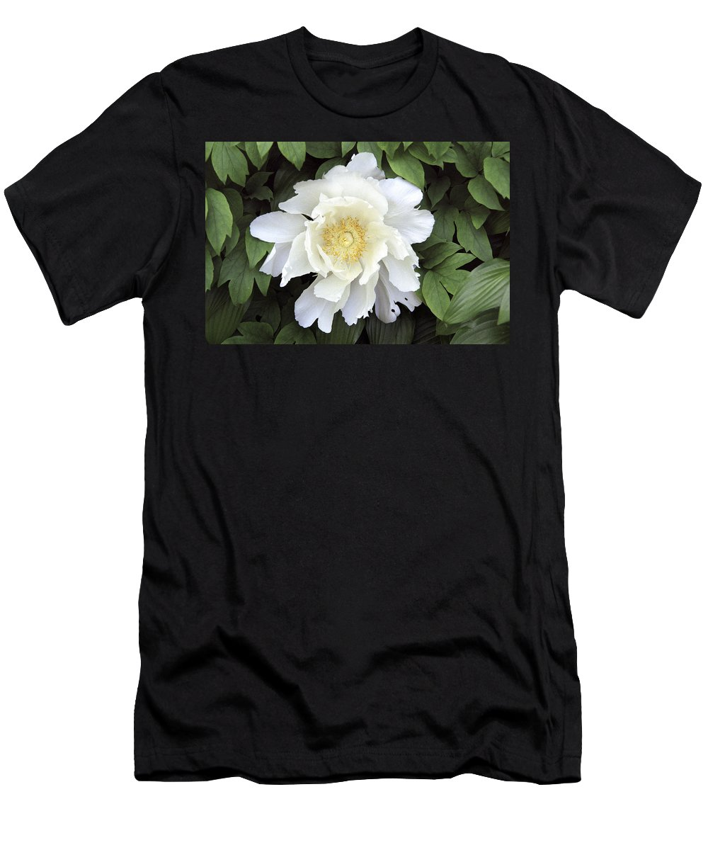 White Men's T-Shirt (Athletic Fit) featuring the photograph White Peonies by Richard Kitchen