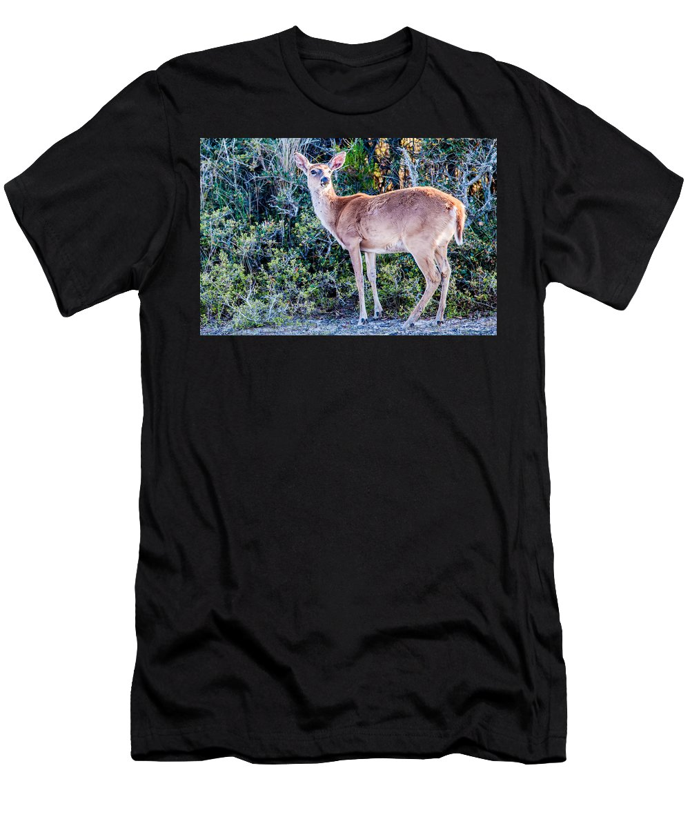 White Men's T-Shirt (Athletic Fit) featuring the photograph White Tail Deer Bambi In The Wild by Alex Grichenko