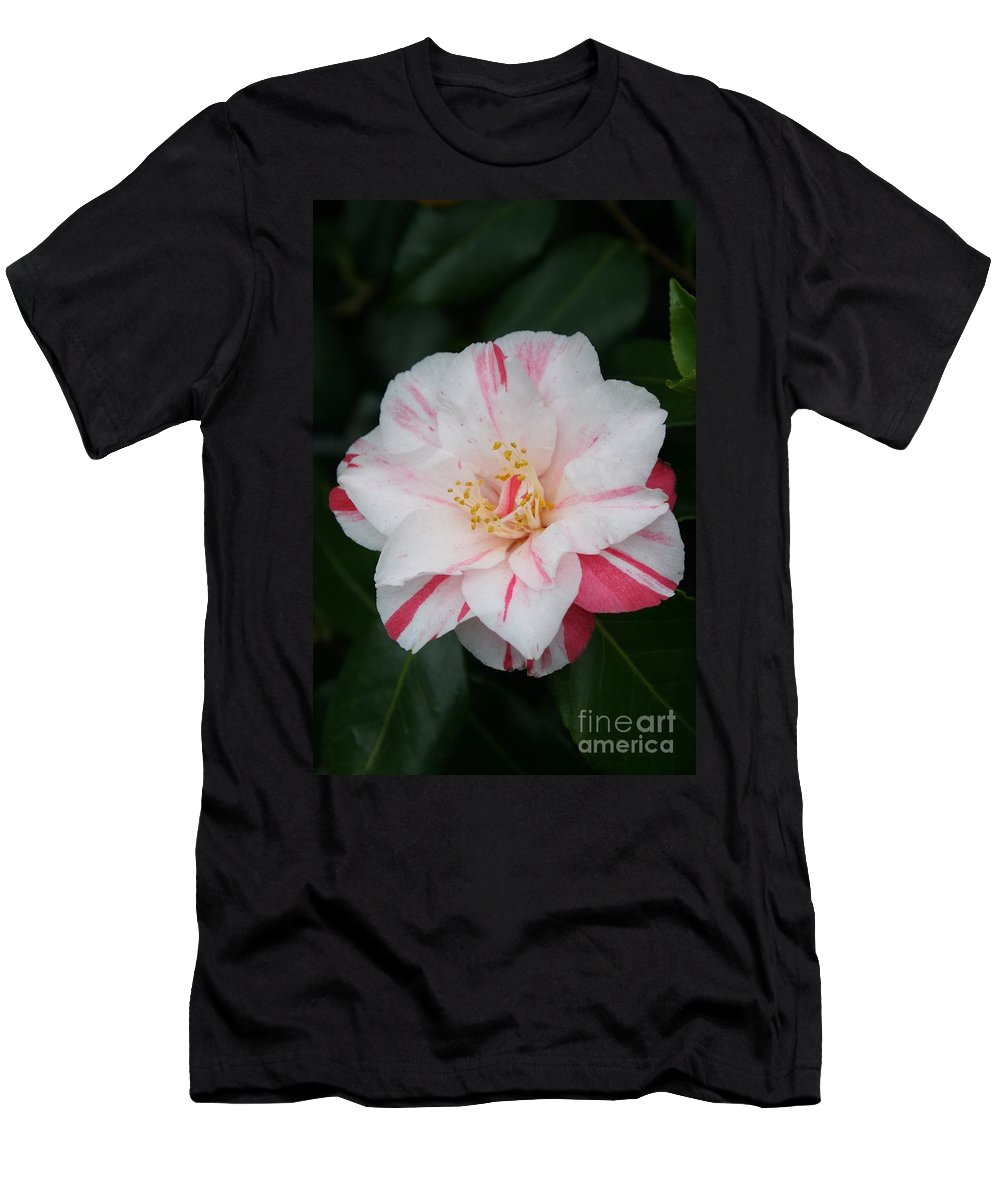 White Camellia Men's T-Shirt (Athletic Fit) featuring the photograph White With Pink Camellia by Christiane Schulze Art And Photography