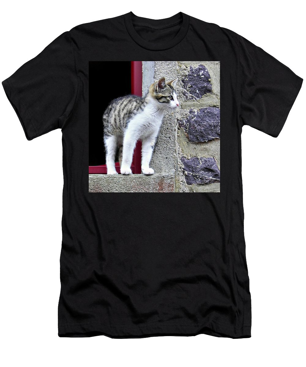 Kitten Men's T-Shirt (Athletic Fit) featuring the photograph Who Goes There - Kitten by Nikolyn McDonald