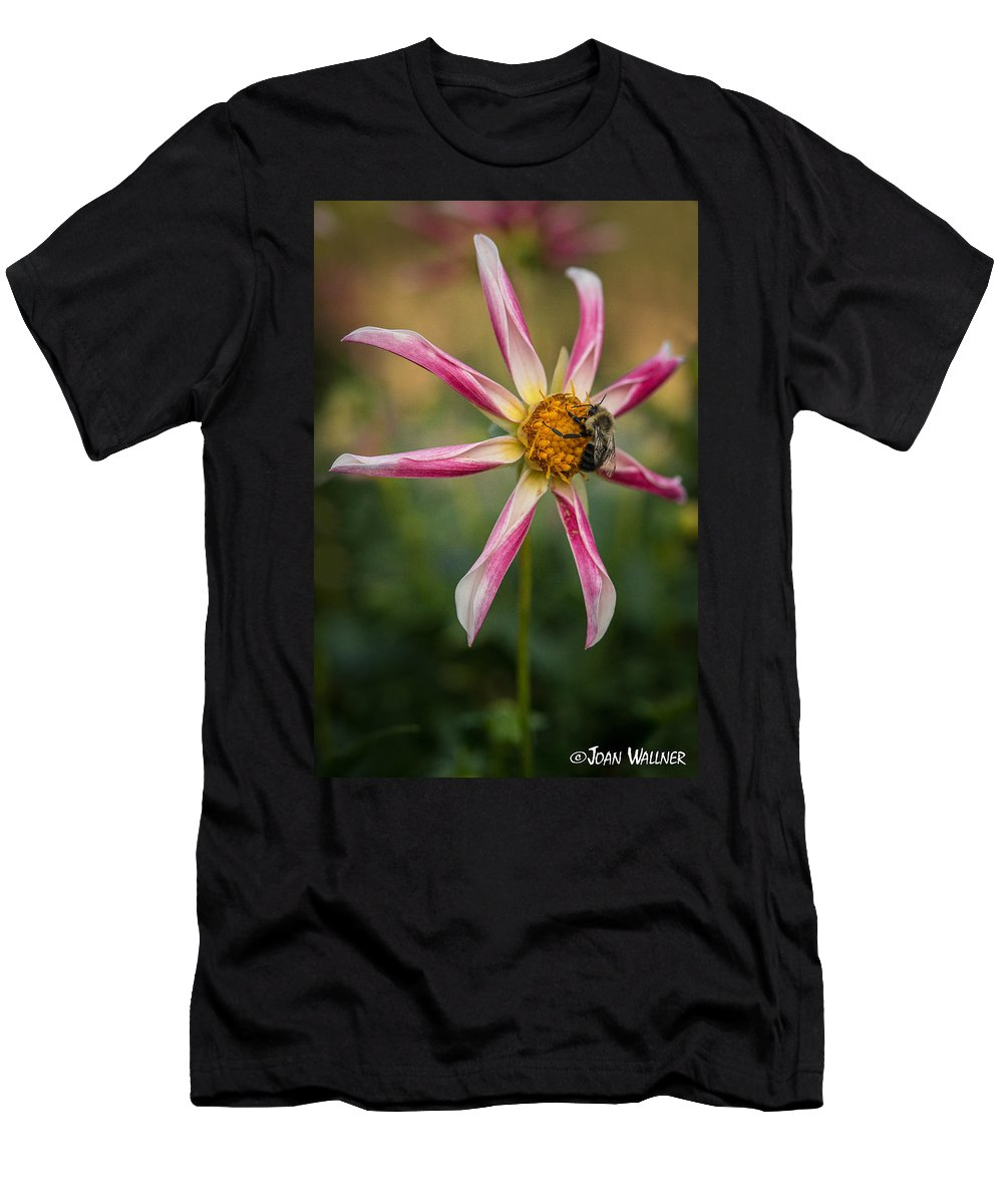 Dahlia Men's T-Shirt (Athletic Fit) featuring the photograph Willie Willie Dahlia by Joan Wallner