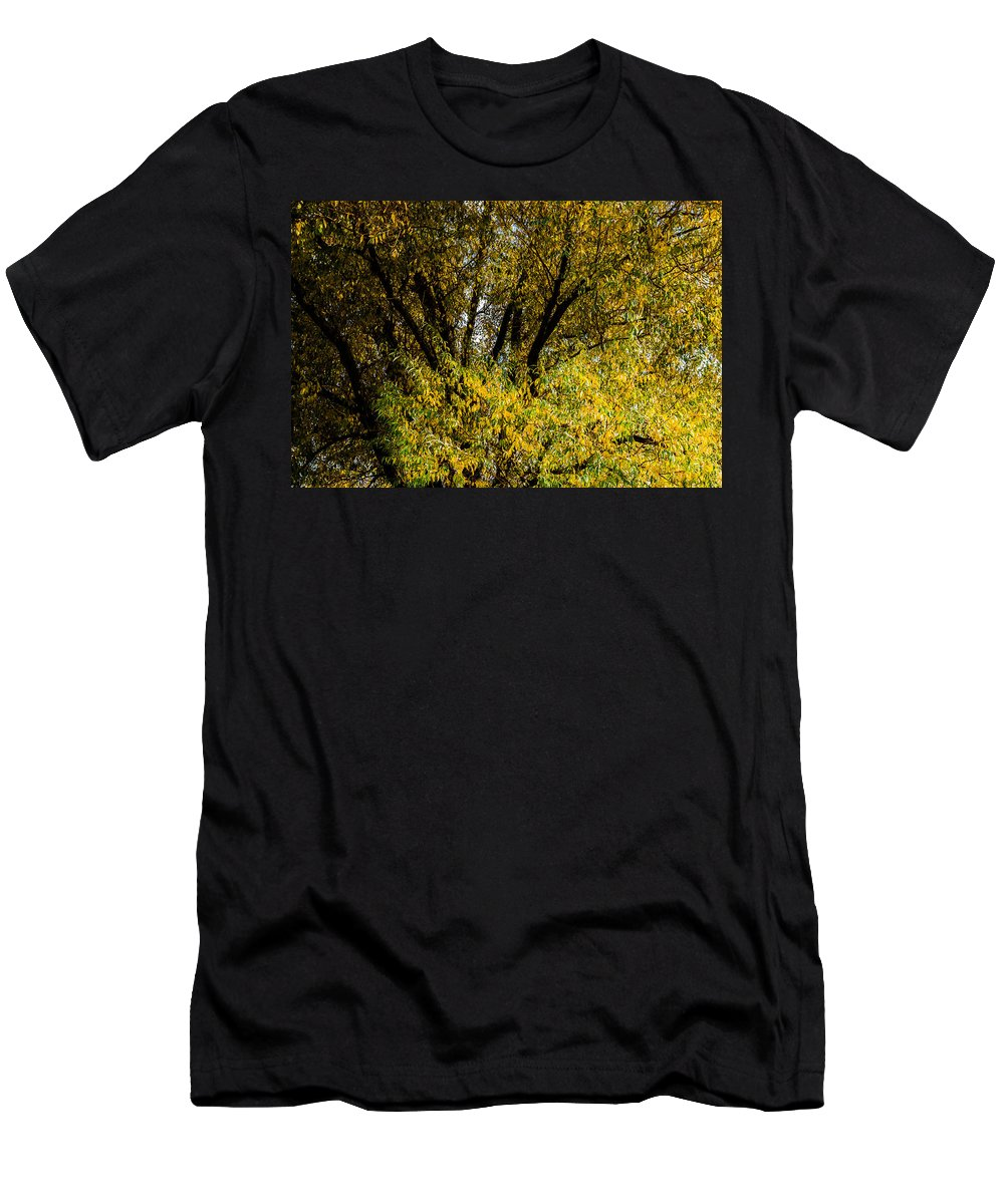 Autumn Men's T-Shirt (Athletic Fit) featuring the photograph Willow Tree by Alexander Senin