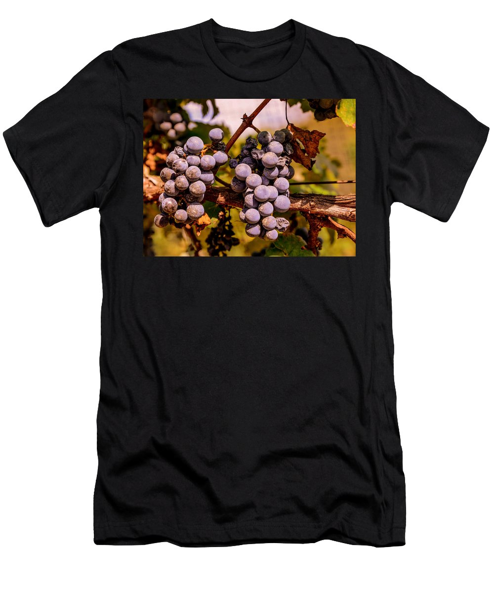 Grapes Men's T-Shirt (Athletic Fit) featuring the photograph Wine Grapes On The Vine by Zina Stromberg