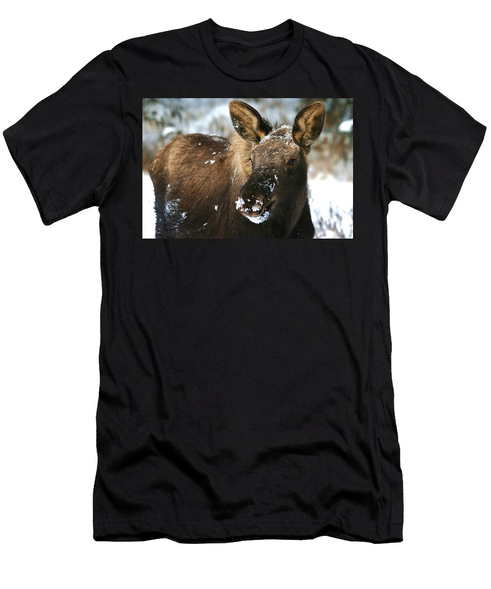 Moose Men's T-Shirt (Athletic Fit) featuring the photograph Winter Baby by Karen Jones