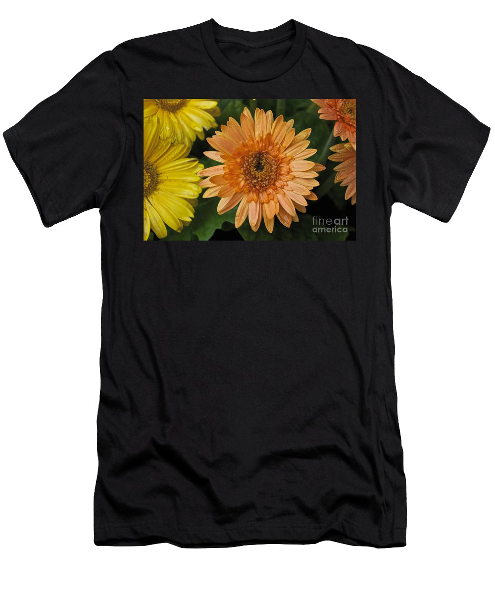 Yellow Men's T-Shirt (Athletic Fit) featuring the photograph Yellow And Peach Daisy by William Norton