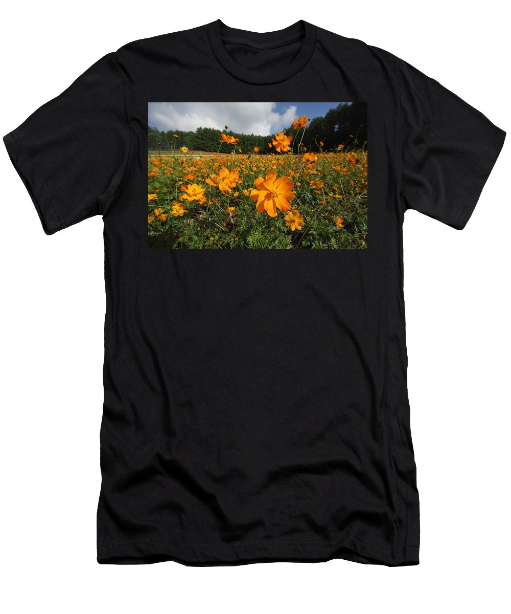 Feb0514 Men's T-Shirt (Athletic Fit) featuring the photograph Yellow Cosmos Field In Flower Japan by Hiroya Minakuchi