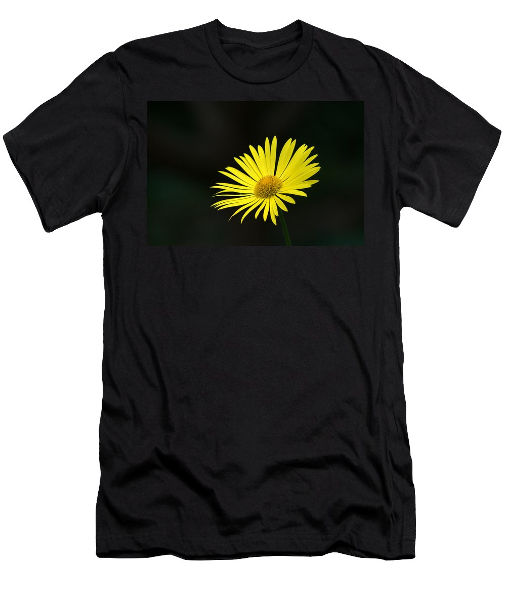 Daisy Men's T-Shirt (Athletic Fit) featuring the photograph Yellow Daisy by Chris Day