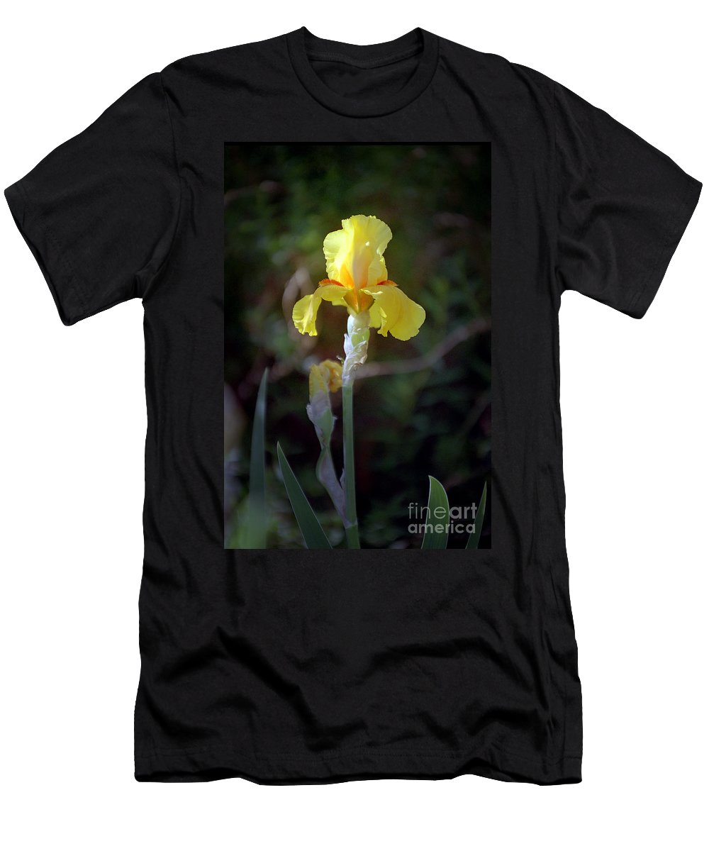 Iris Men's T-Shirt (Athletic Fit) featuring the photograph Yellow Iris by Kathy McClure