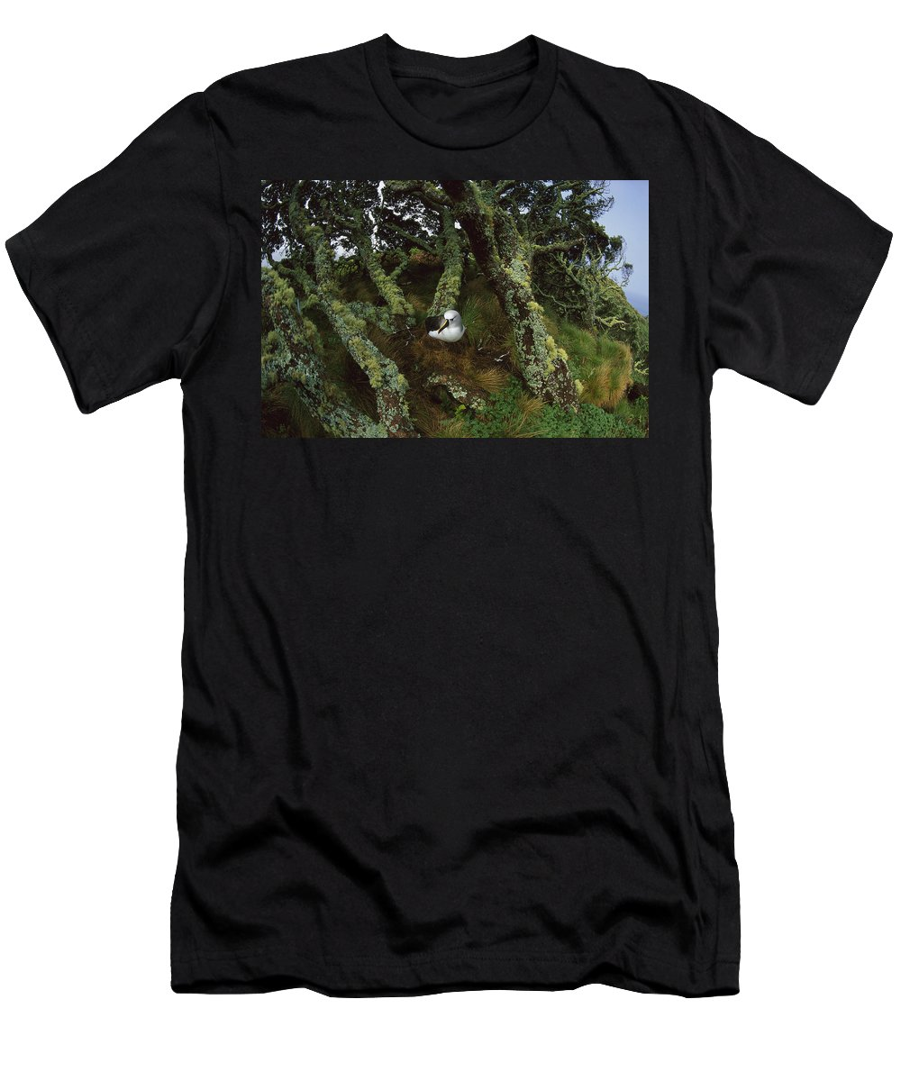 Feb0514 Men's T-Shirt (Athletic Fit) featuring the photograph Yellow-nosed Albatrosses In Ferns by Tui De Roy