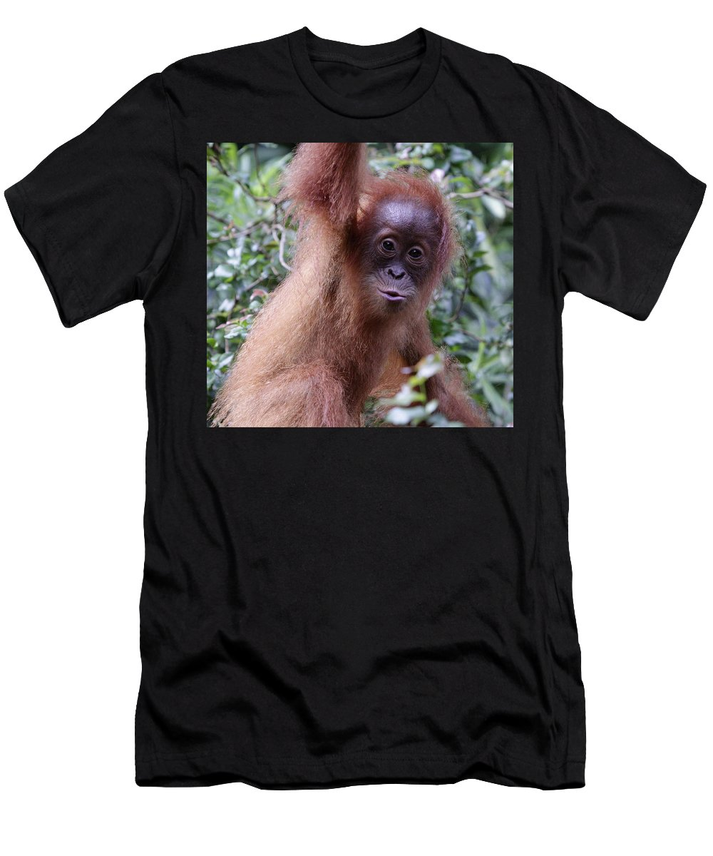 Singapore Men's T-Shirt (Athletic Fit) featuring the pyrography Young Orangutan Kiss by Shoal Hollingsworth